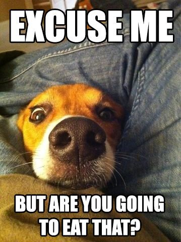 funny dog pictures - excuse me but you are going to eat that